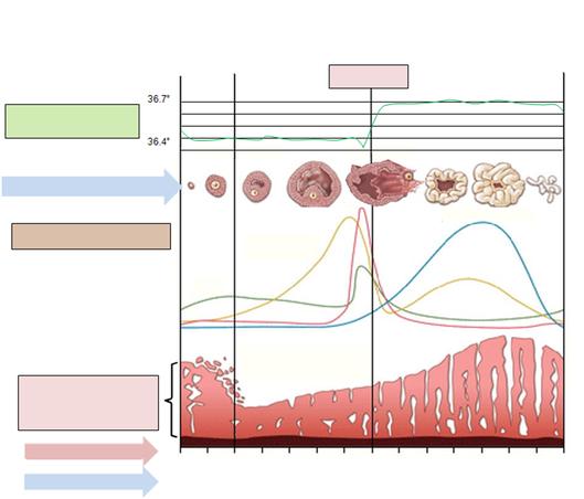 Menstruationszyklus Maedchensache Ch: Eisprung (oder Ovulation) Ist Ein Zerreißen Des Follikels